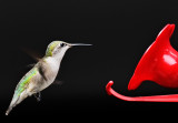 hummingbird 95