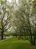 DeMenil Park in early spring 01