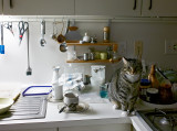 Heidi on kitchen counter with dishes 01