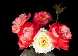 rose gathering 02