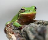 babyfrog.jpg