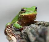 babyfrog1.jpg