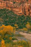 Zion Fall Color 6.jpg