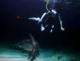 Night Diving With Tarpon