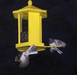Bird Fight Club