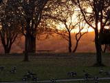 Sunset in Autumn.jpg