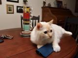 Milo On the Table.jpg