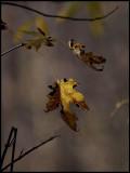 Three More Leaves Left.jpg