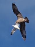 Seagull in Flight 13_filtered.jpg