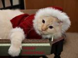 Santa Claws Milo 2.jpg