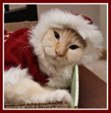 Santa Claws Milo 3.jpg