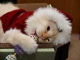 Santa Claws Milo 6.jpg