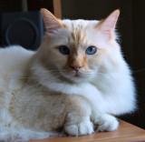 Milo on My Desk Again.jpg