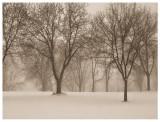 Heavy Snow Fall Sepia_F.jpg