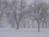 Heavy Snow Fall.jpg