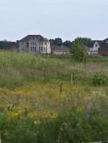 Around the Neighborhood, lots of wild flower areas still