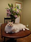 Milo with My Flowers