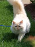 Milo on His Outdoor Adventure 2