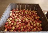 Apple Orchard Barn 7.jpg