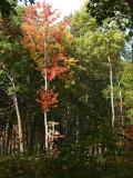 Autumn 2009_5.jpg