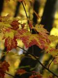 Autumn 2009_7.jpg