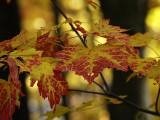 Autumn 2009_8.jpg