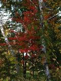 Carlos Avery Fall 3.jpg
