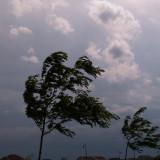 Wind Bending Trees