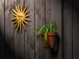 Sun n Plant on Barn Board