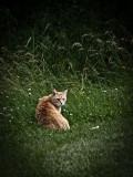 Grunge Cat.jpg