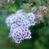 Sweet Little Flowers.jpg