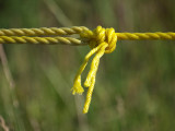 Yellow Knot.jpg