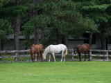 Horses at Coon Lake.jpg