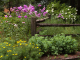 Flower Garden at Coon Lake.jpg