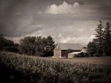Barn in a Corn Field rp.jpg