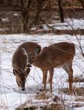 2 Beautiful Young Bucks