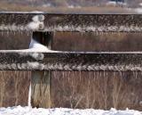 Sun Melt on Fence
