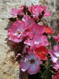 Flower Bouquet N Stone