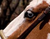 Blue-eyed Beauty C.jpg