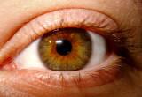 My Granddaughter's Eye