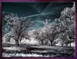 Diverses_Infrared_Infrarouge_22.jpg