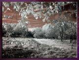Diverses_Infrared_Infrarouge_23.jpg