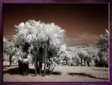 Diverses_Infrared_Infrarouge_26.jpg