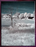 Diverses_Infrared_Infrarouge_27.jpg