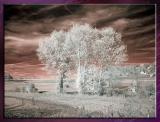 Diverses_Infrared_Infrarouge_31.jpg