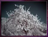 Diverses_Infrared_Infrarouge_45.jpg