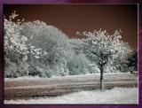 Diverses_Infrared_Infrarouge_47.jpg