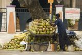 Coconut stall by the road