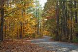 Golden Carolina Country Road
