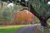 South Carolina in Fall